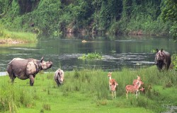 Wildlife Safari & Rafting